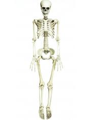 Skeleton XLarge - Halloween Decorations